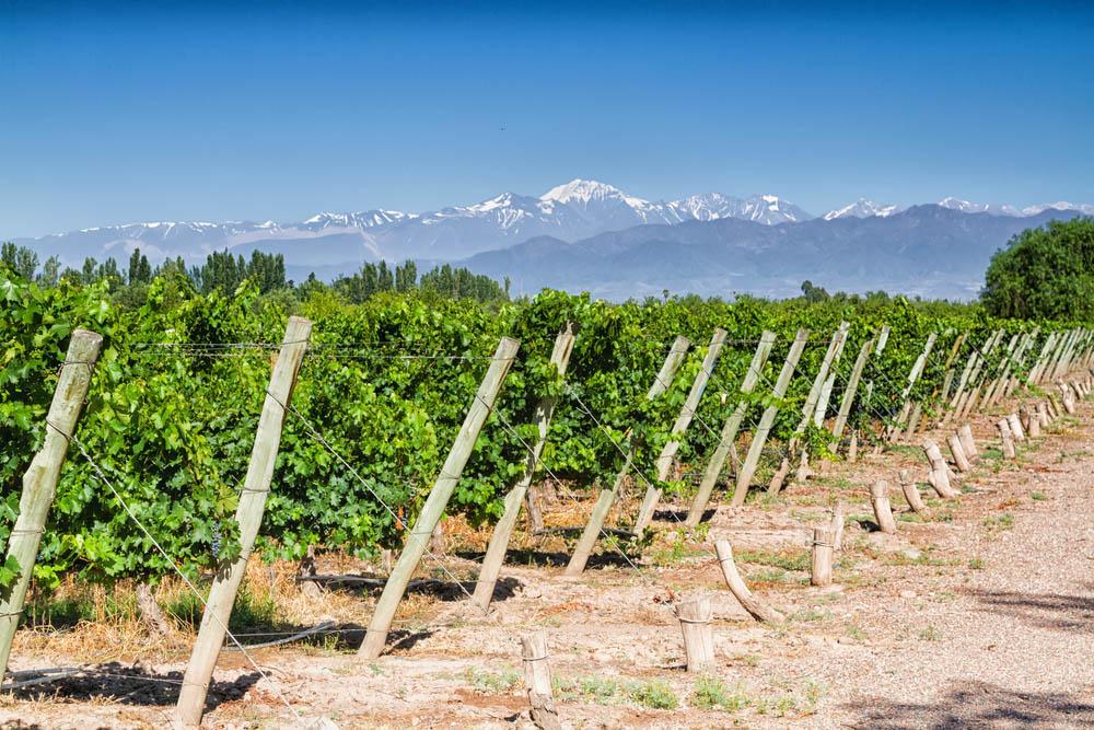Vin från Aconcagua
