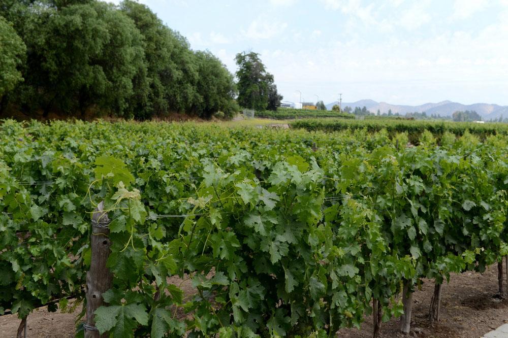 Vin från Maipo