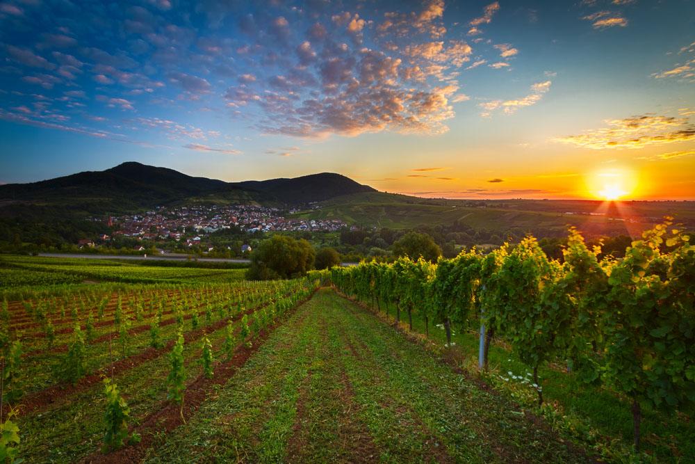 Vin från Pfalz