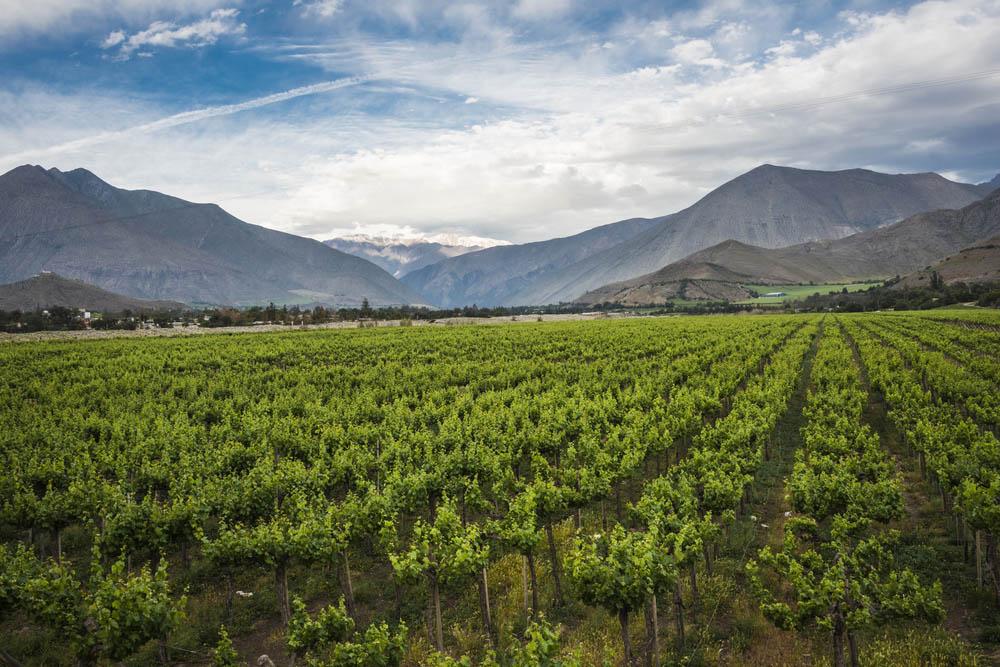 Vin från Rapel