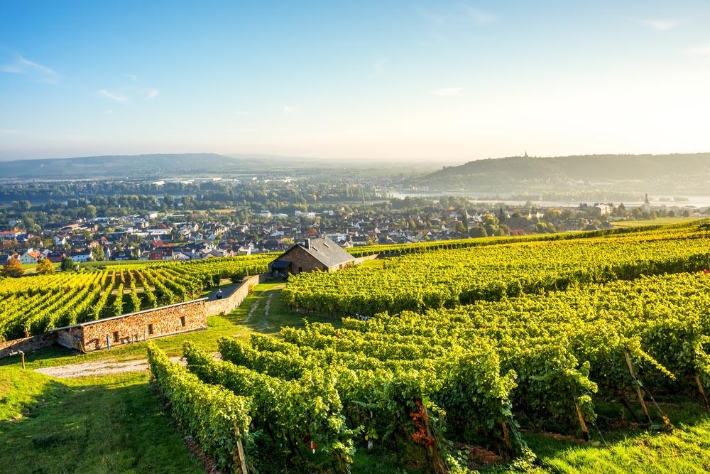 Vin från Rheingau