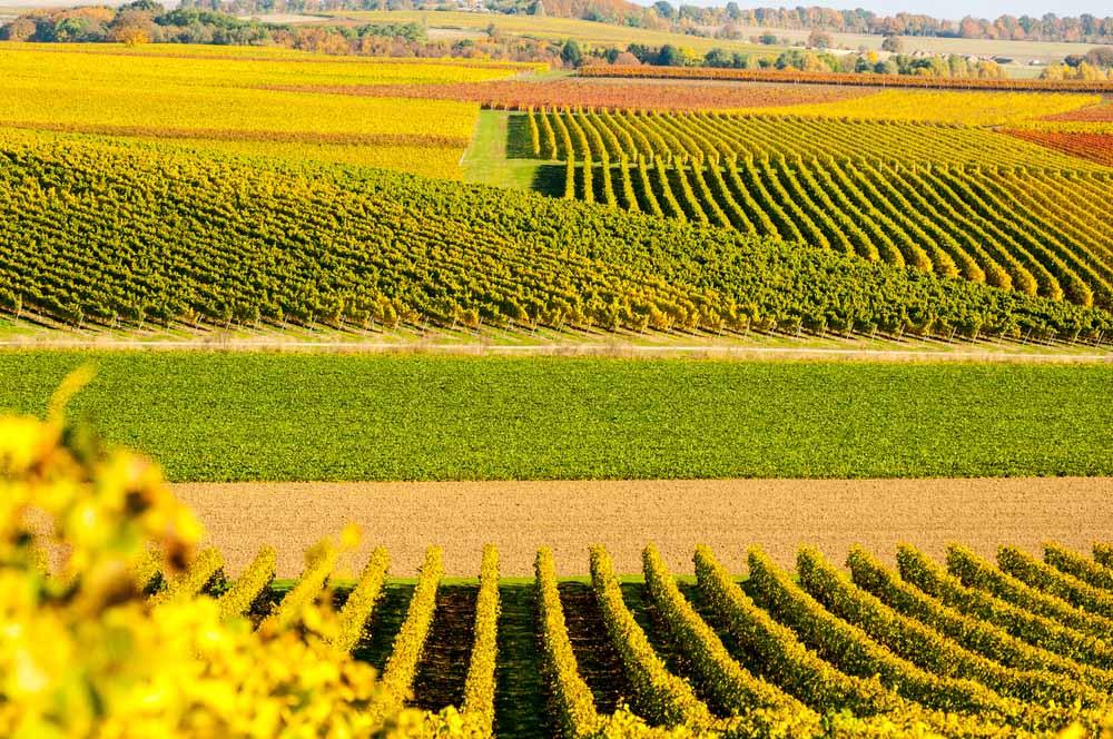 Vin från Rheinhessen