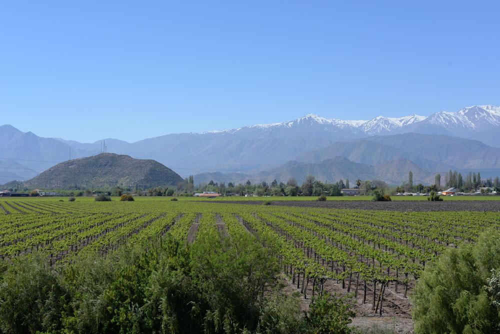 Vin från Valle Central